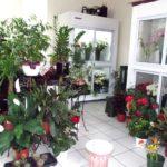 """Flower shop """"Fragrans"""""""
